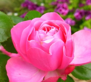 shine shame free flower luminous self-love pippa-la doube pippa creativity me copy.JPG