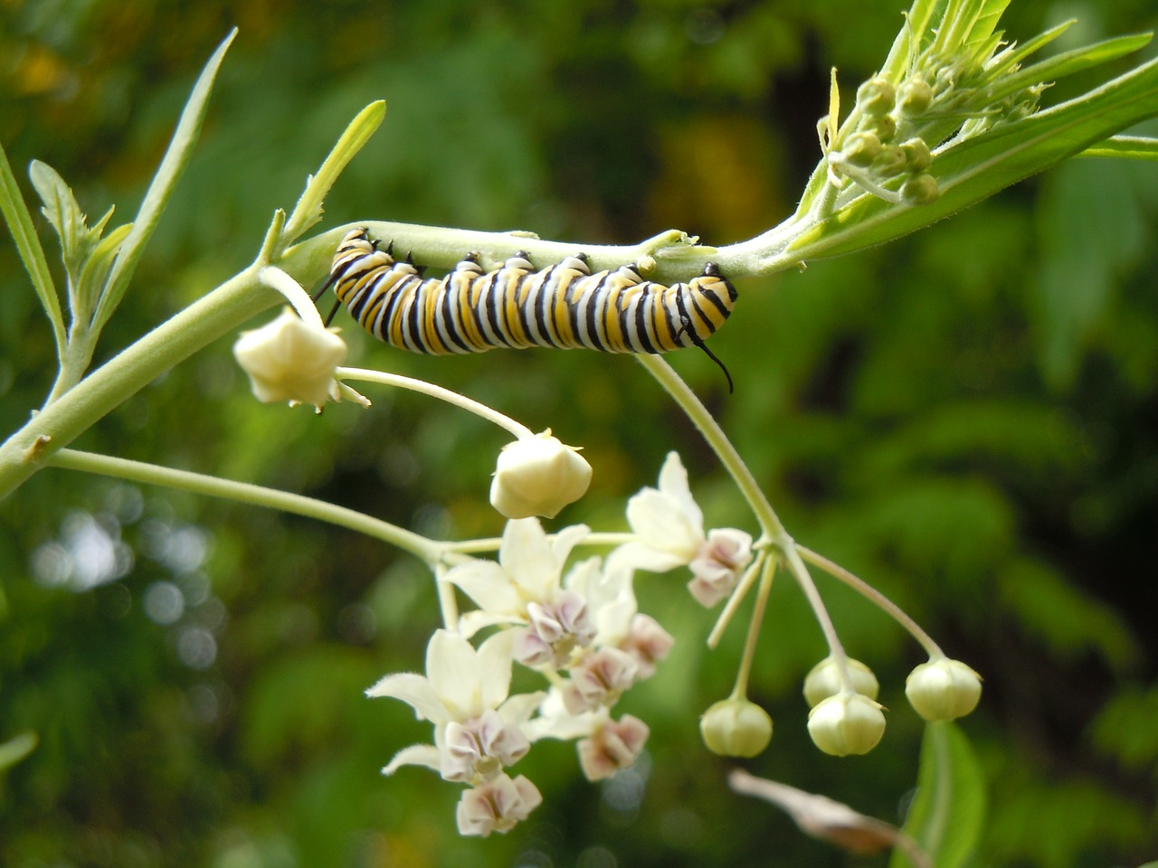 Discomfort and the Catipillar - Our Body Soul Complex has to go about a Caterpillar Like Restructure of form, in order to accommodate the new improved Soul Upgrade.