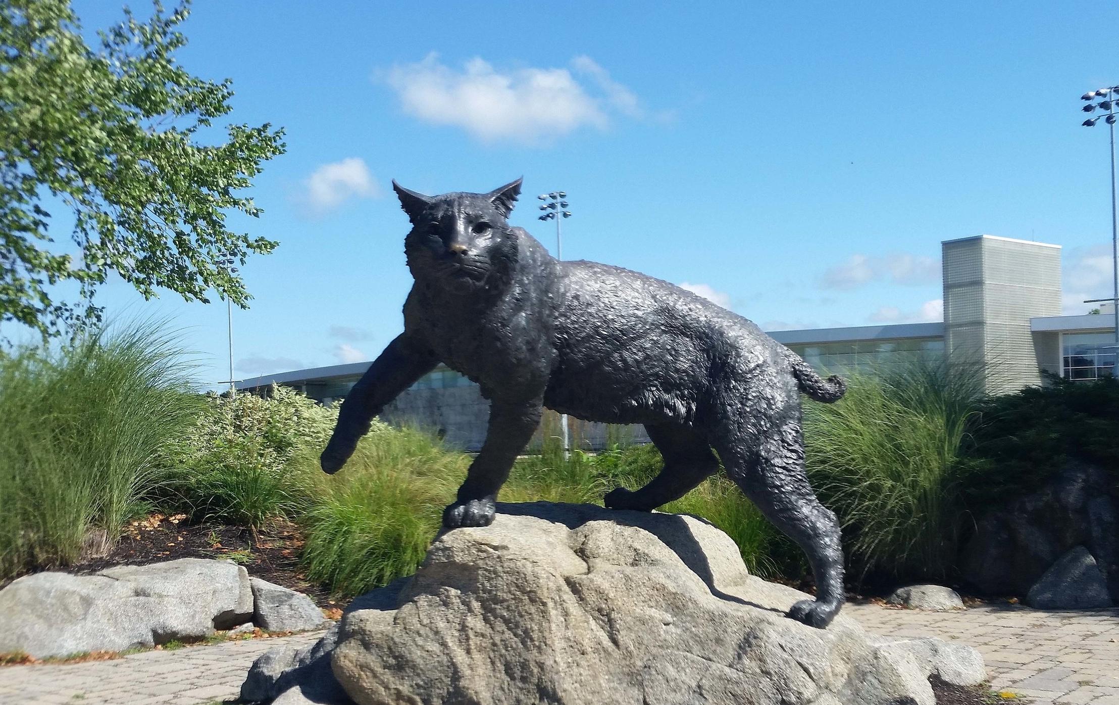 Wildcat Plaza