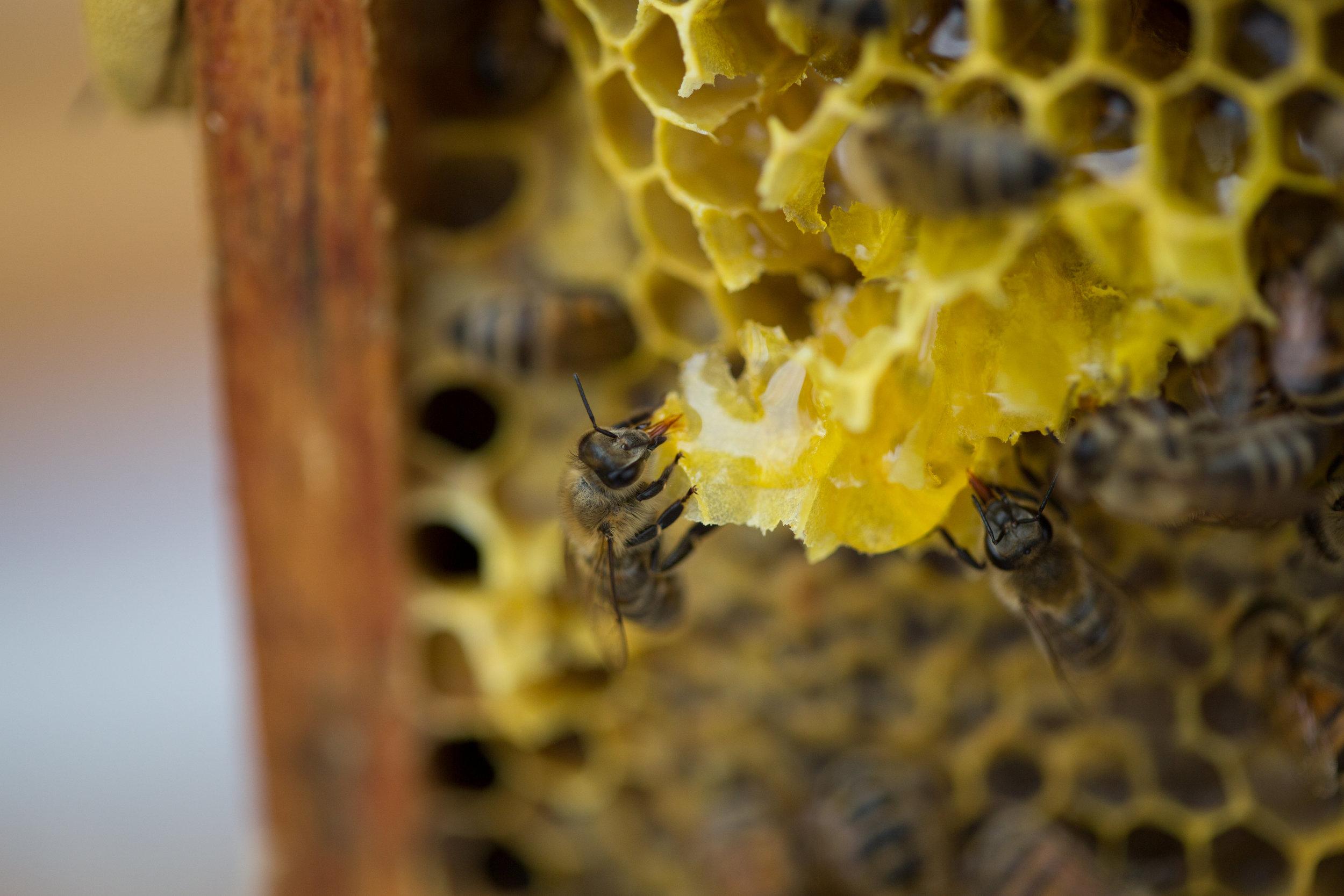 bee whyld honey looking delicious