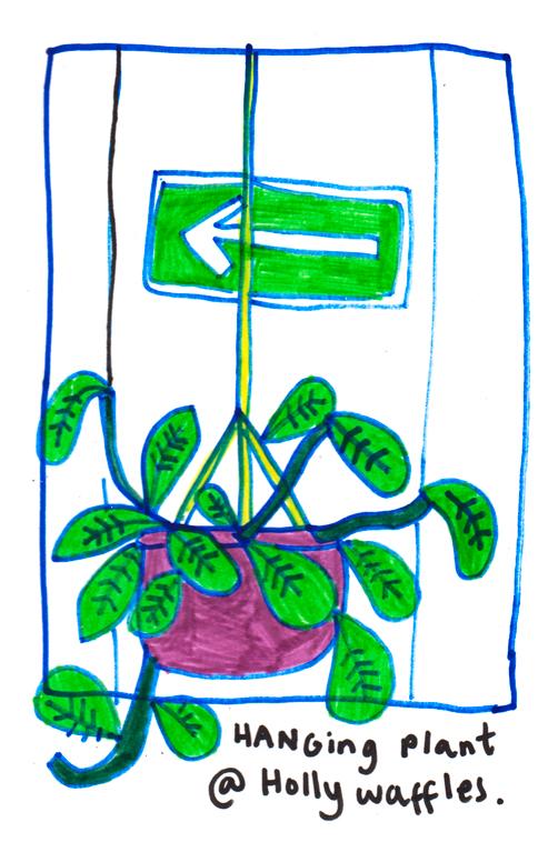 hangingplant.jpg