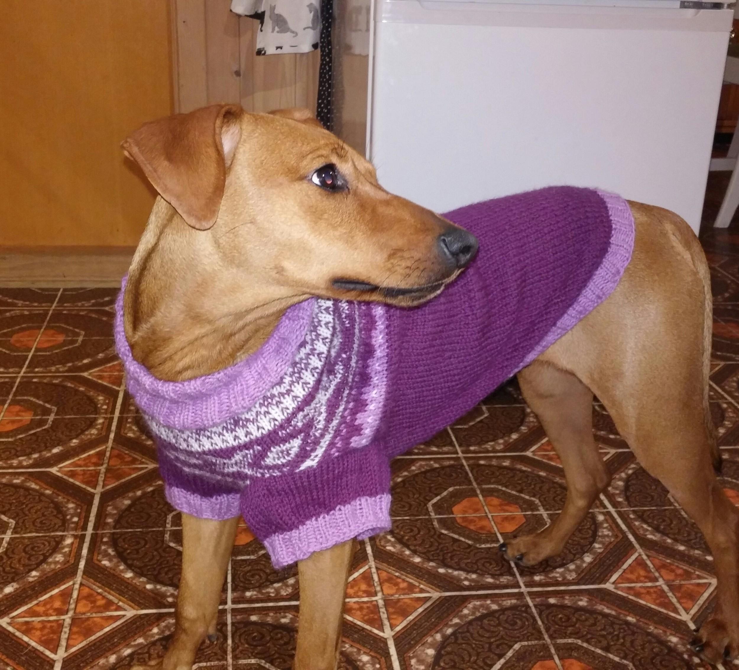 Sukiwith new sweater