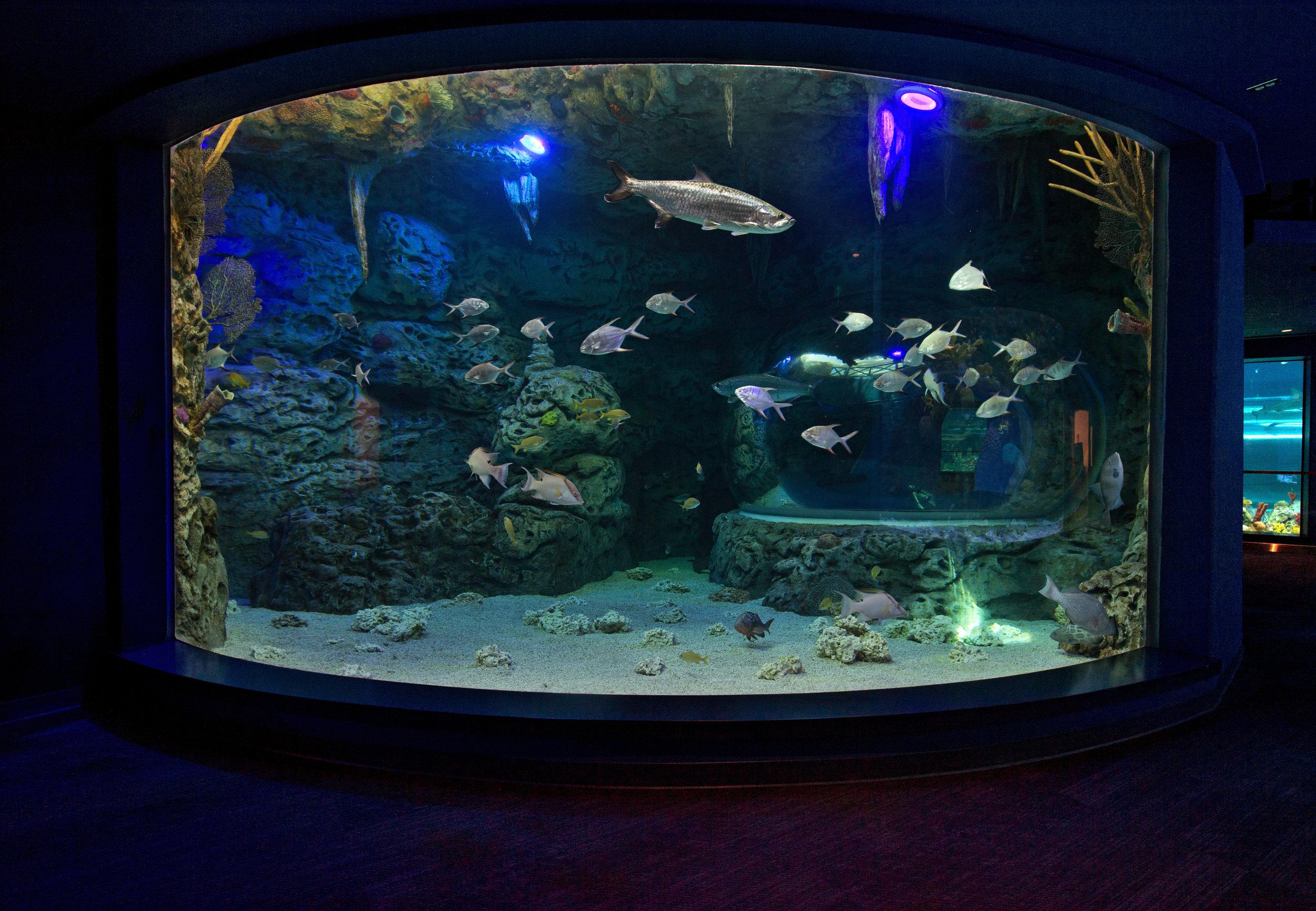 Aquarium_8644.jpg