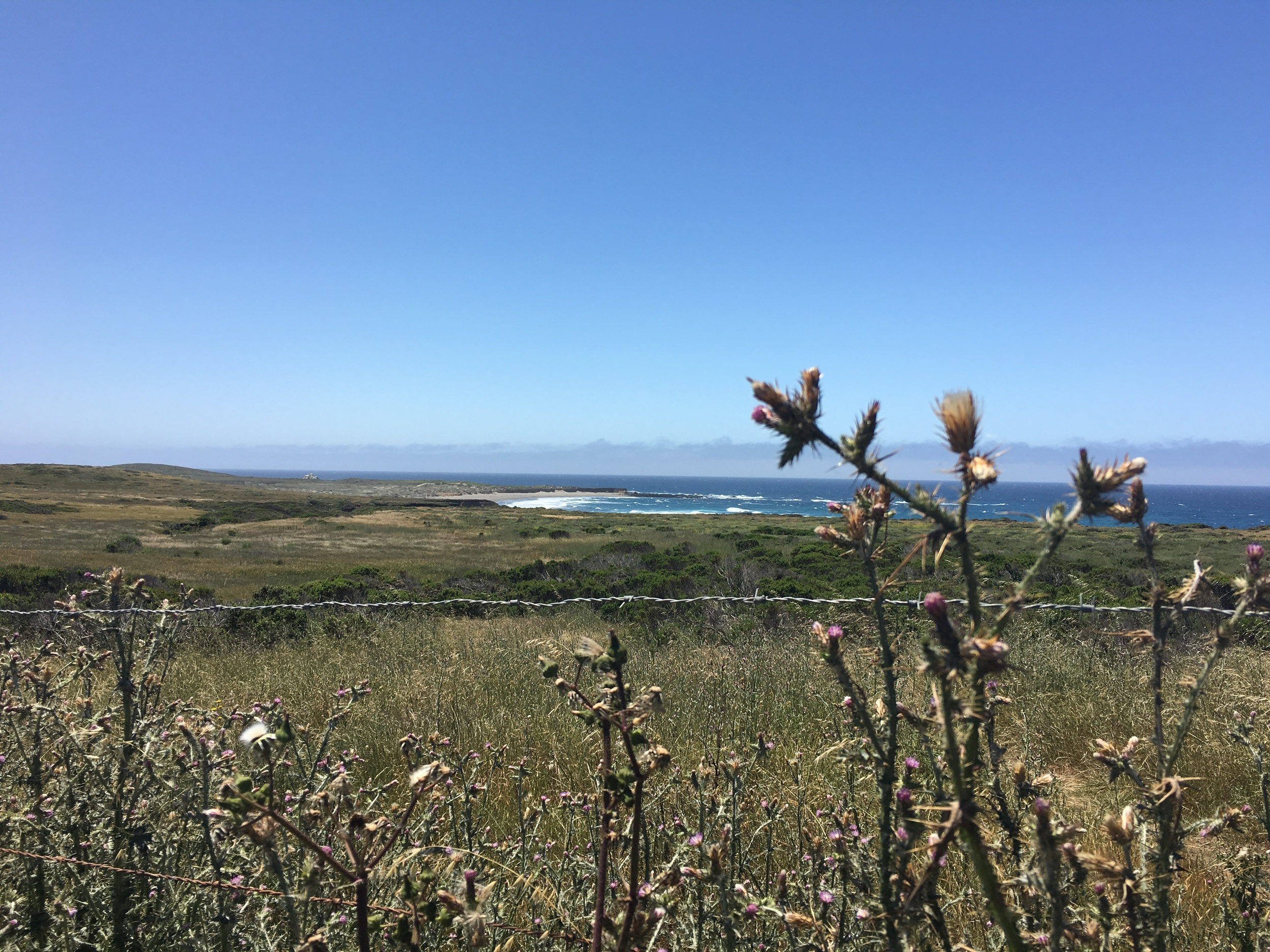Elephant seals, whales, eagles, zebra the ocean... the view doesn't get much better than this.