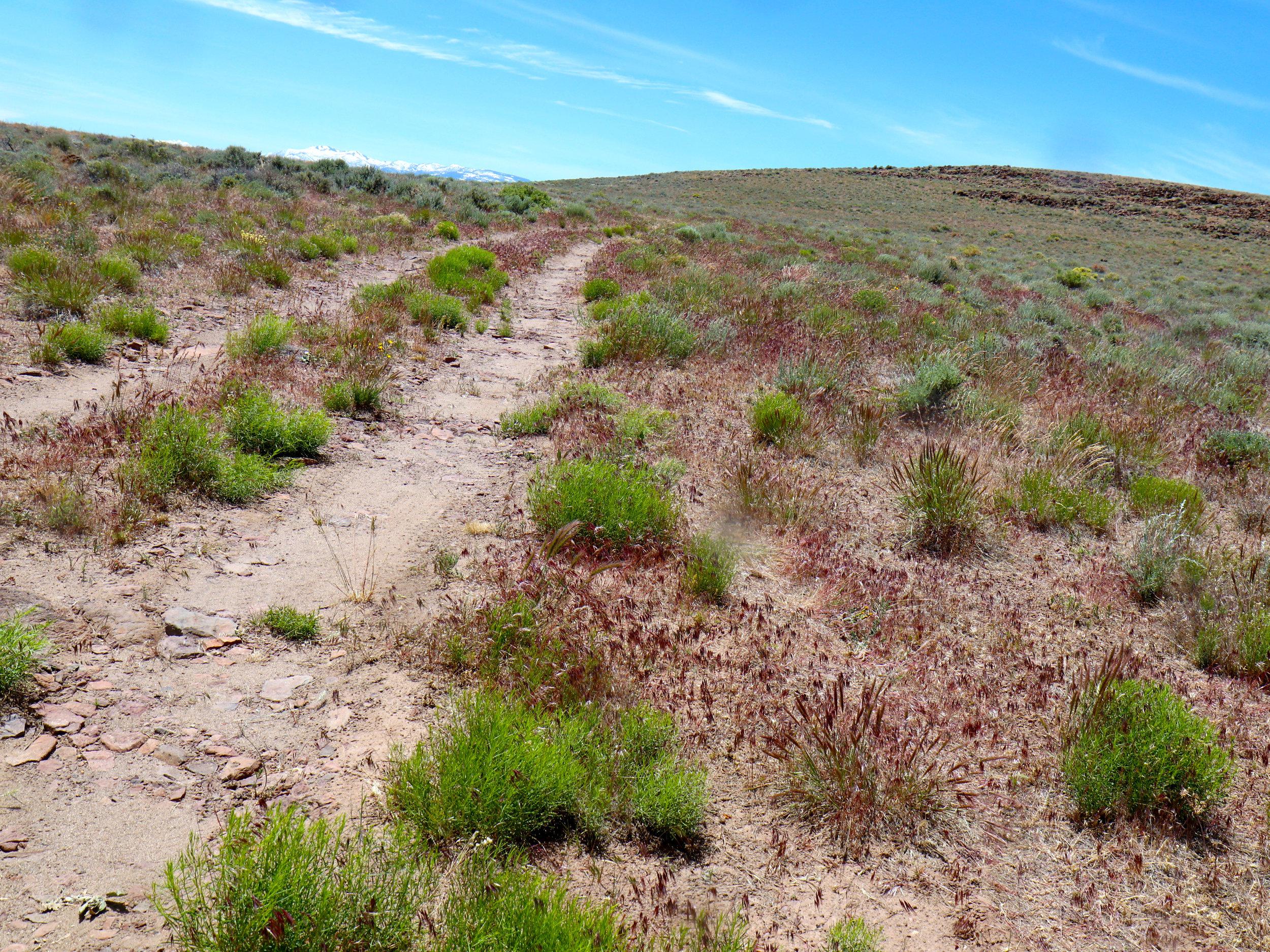 Gifford-canyon1.jpg
