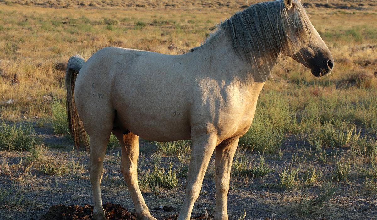 ss508-wildhorse.jpg