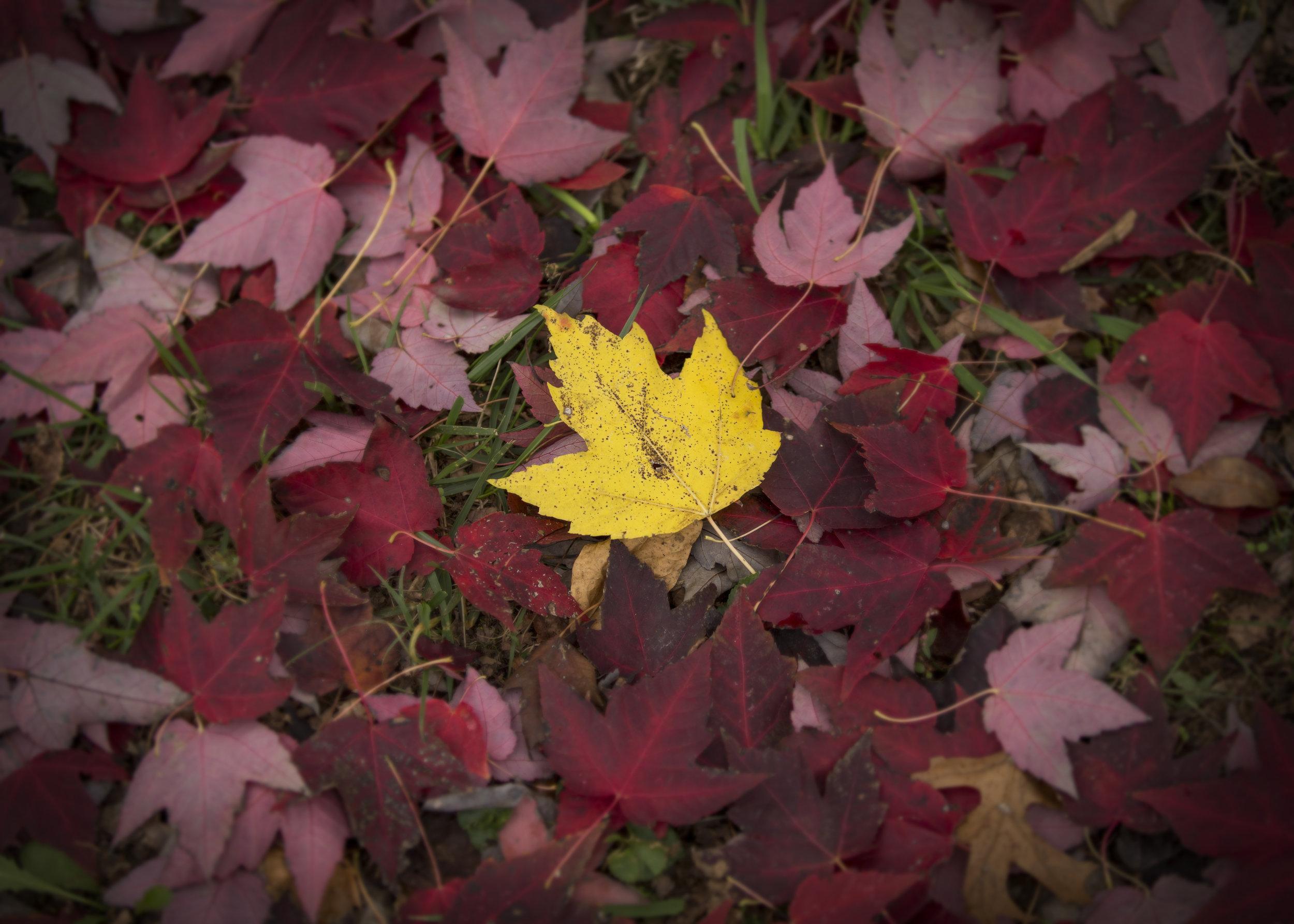 yellow leaf.jpg
