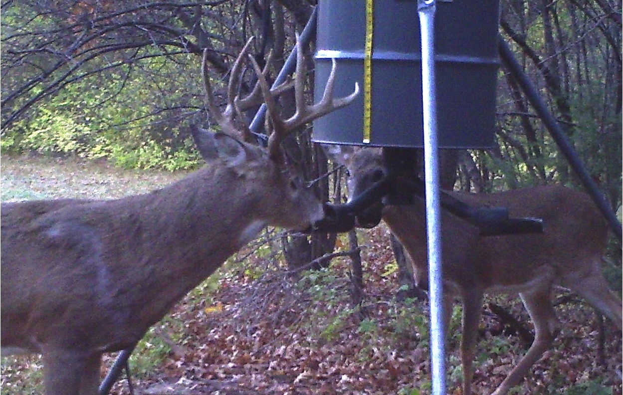 buck and doe at feeder.jpg