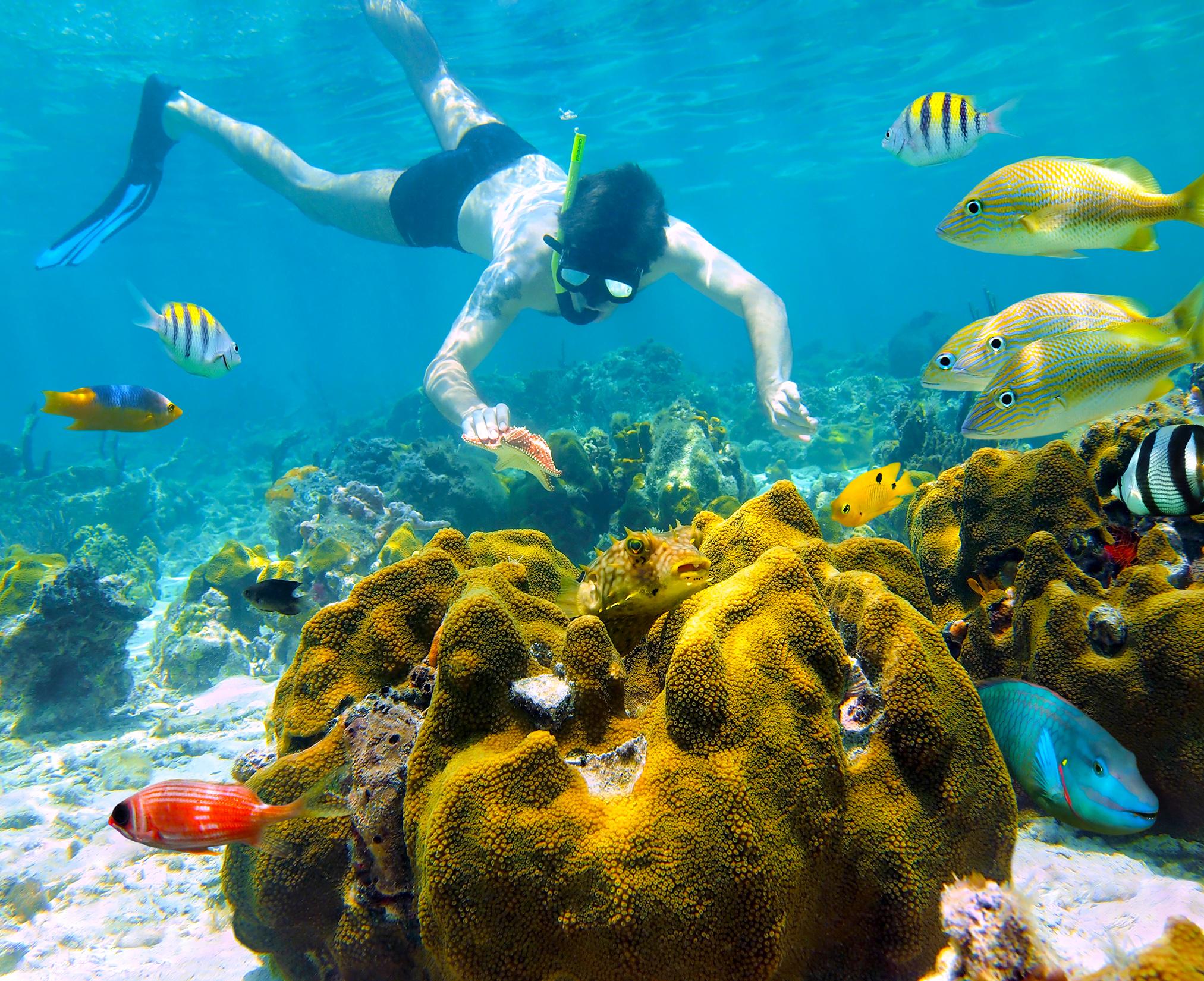Snorkeling in the Virgin Islands