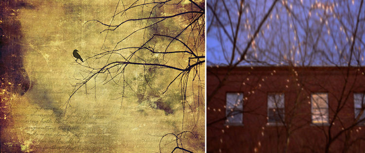 Photo Credits: © Christy Hydeck (left) © Susan Tuttle (right)