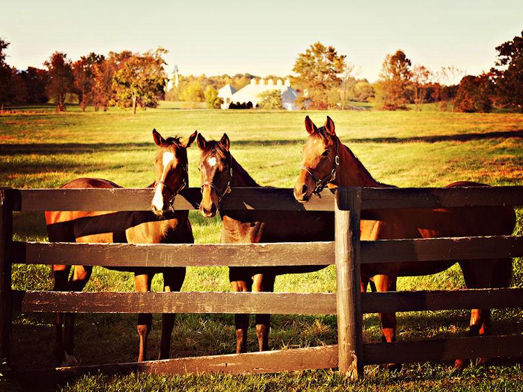 Middleburg, Virginia |© Christy Hydeck