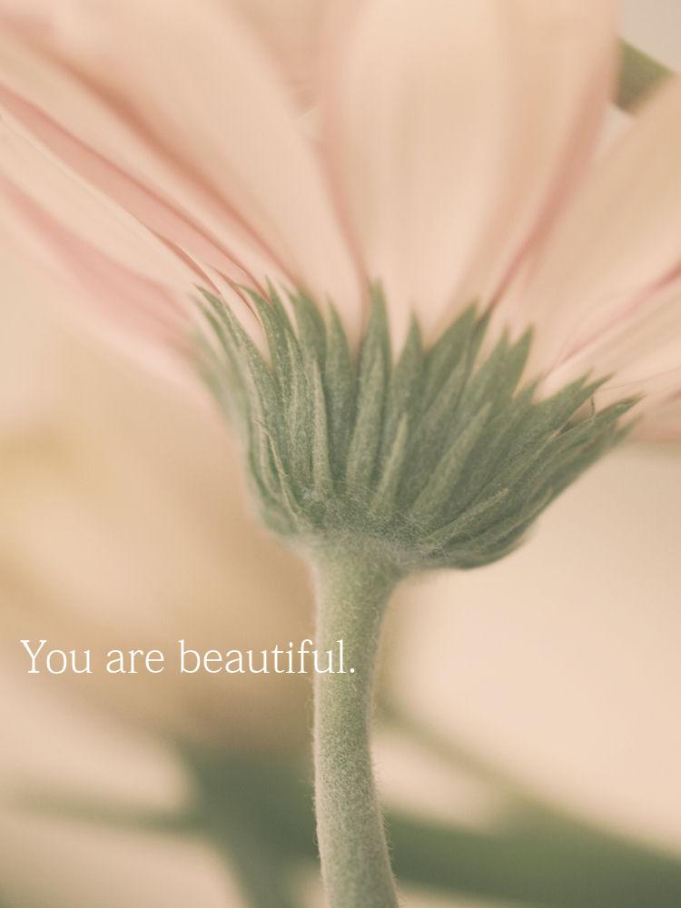 Macro Flower | Raleigh, North Carolina |© Christy Hydeck