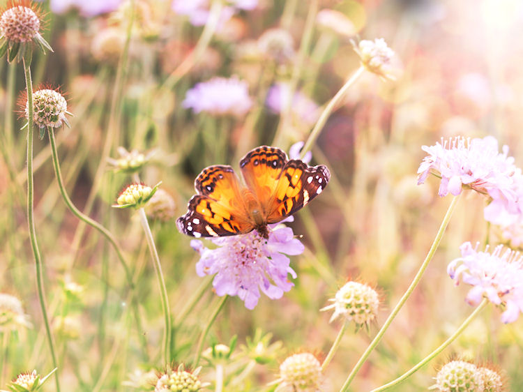 Butterfly photographed at the State Fairgrounds in Raleigh, North Carolina |© Christy Hydeck