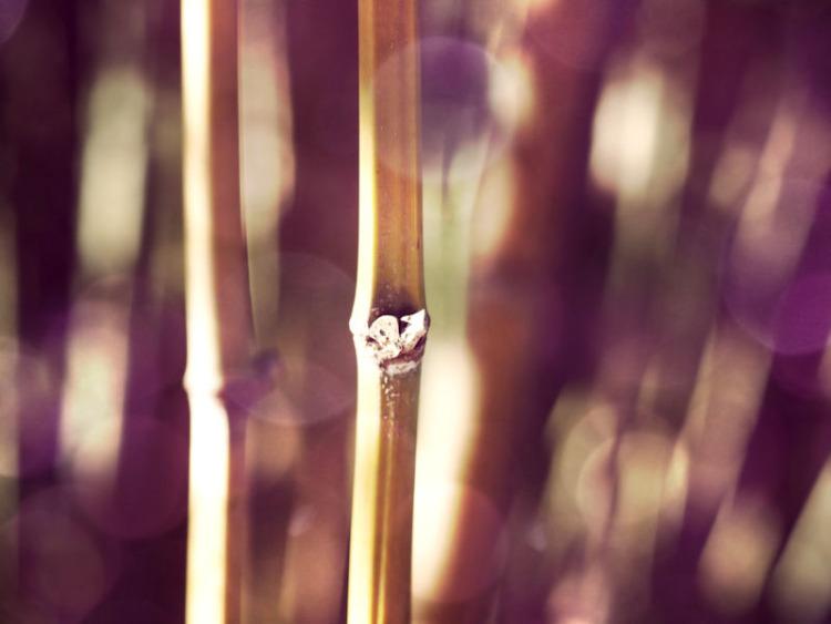 Bamboo | Duke Gardens | Durham, North Carolina |© Christy Hydeck