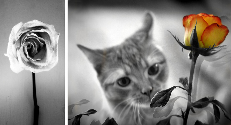 Photo Credits:© Susan Tuttle (left), © Christy Hydeck (right)