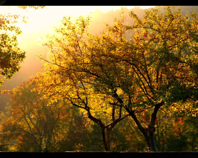 Sky Meadows State Park | Delaplane, Virginia |© Christy Hydeck