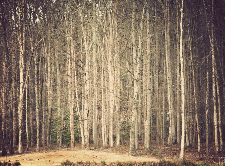 Locust Shade Park | Quantico, Virginia |© Christy Hydeck
