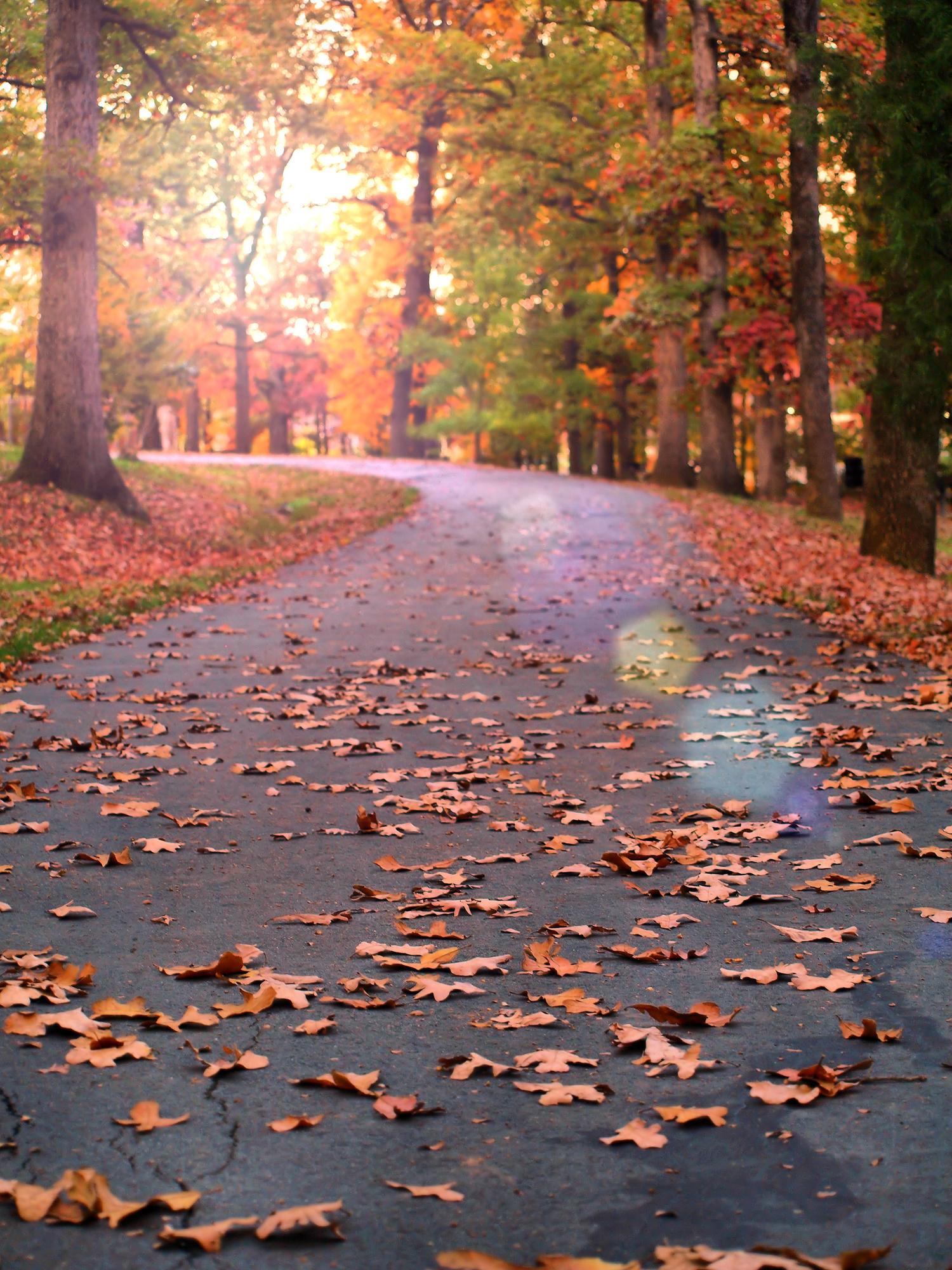Autumn at Duke Park   Durham, North Carolina  © Christy Hydeck