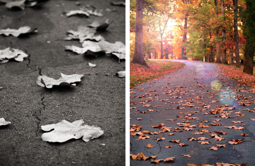 Autumn Photography taken at Duke Park in Downtown Durham, North Carolina
