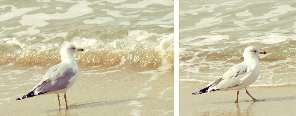 Seagull taking a stroll on the shore at Virginia Beach, Virginia.|© Christy Hydeck