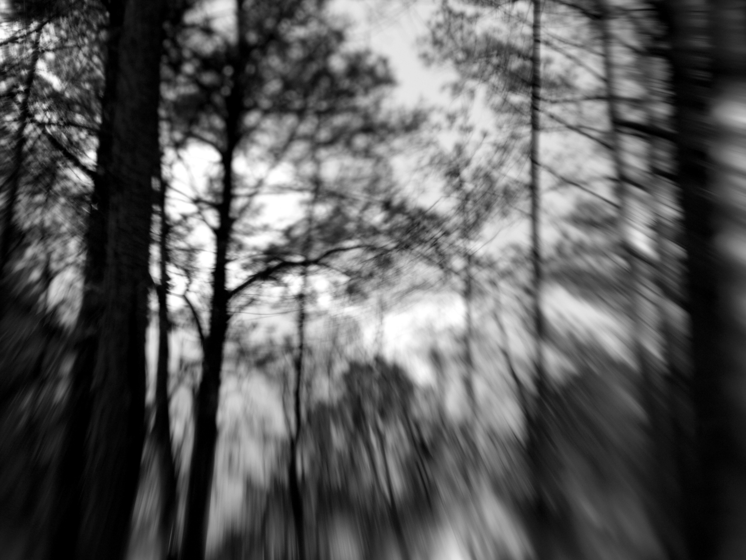 Taken in my backyard, in Raleigh, North carolina - with my lensbaby lens.