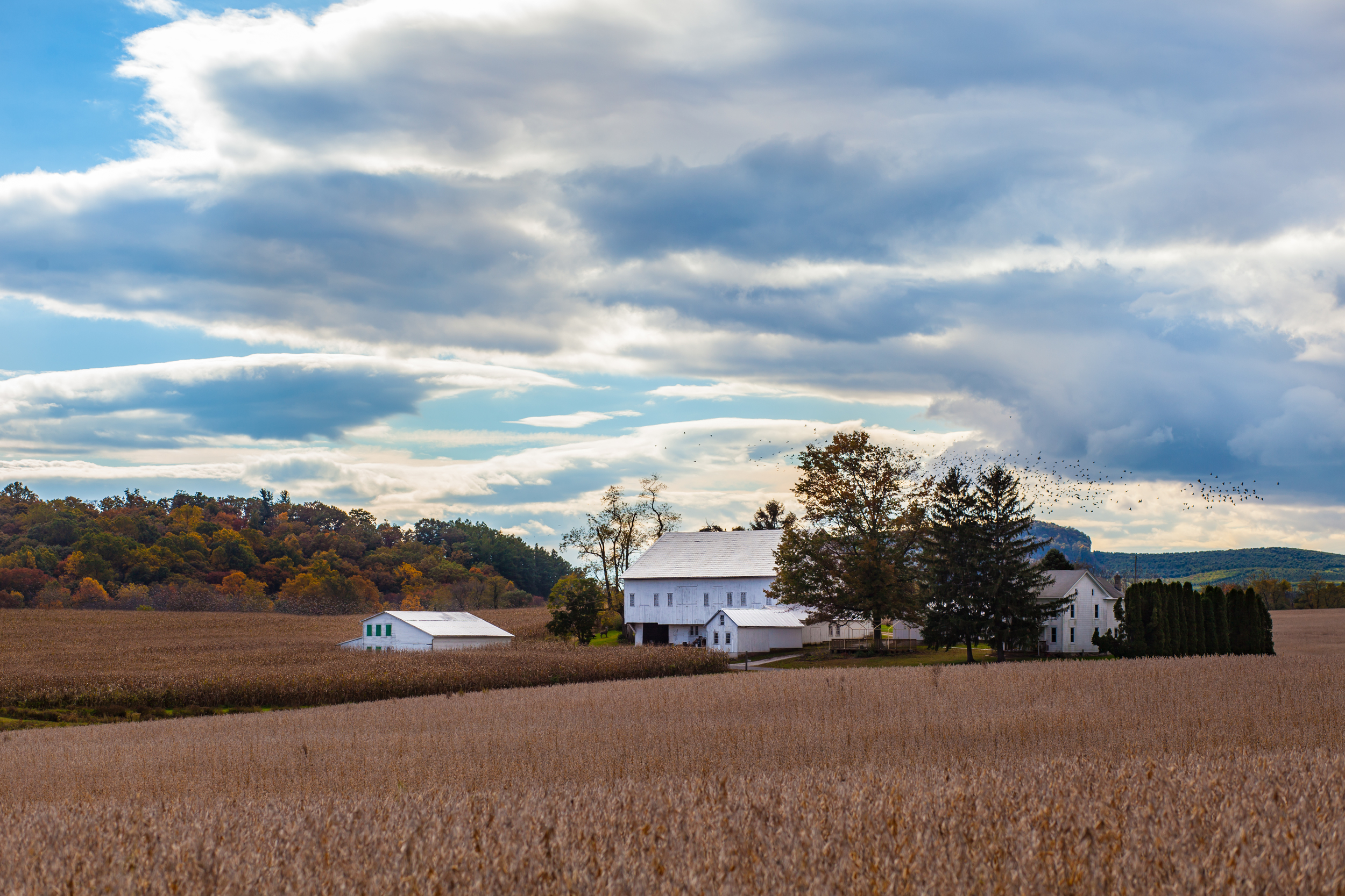 Bushey School Road | York Springs, PA |© 2016 Christy Hydeck (Click image to view larger + in a new window)
