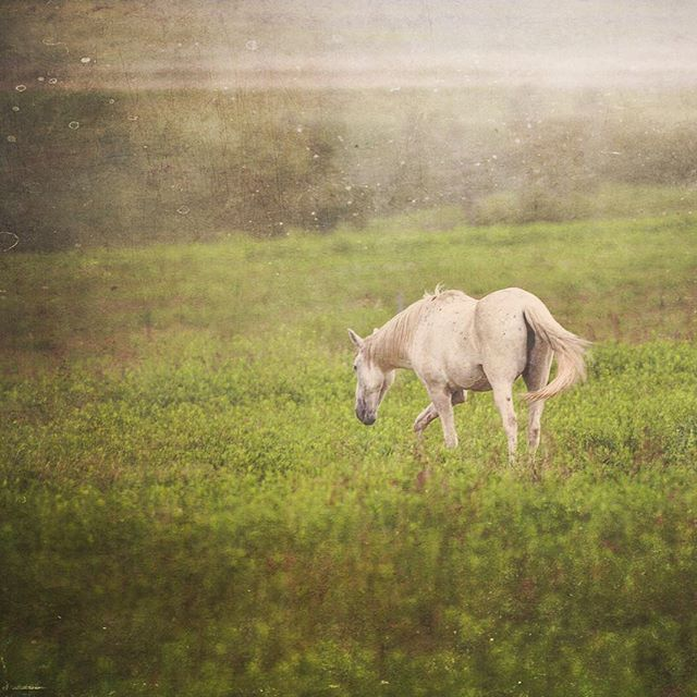 """The essential joy of being with horses is that it brings us in contact with the rare elements of grace, beauty, spirit, and fire."" ~Sharon Ralls Lemon  Taken at the Black Hills Wild Horse Sanctuary in lovely @southdakota #sodak #blackhills  See the full photo on my Twitter feed: ArtByChrysti there :)"