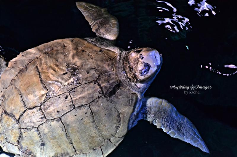 {PHOTOS} Under the Sea at the New England Aquarium
