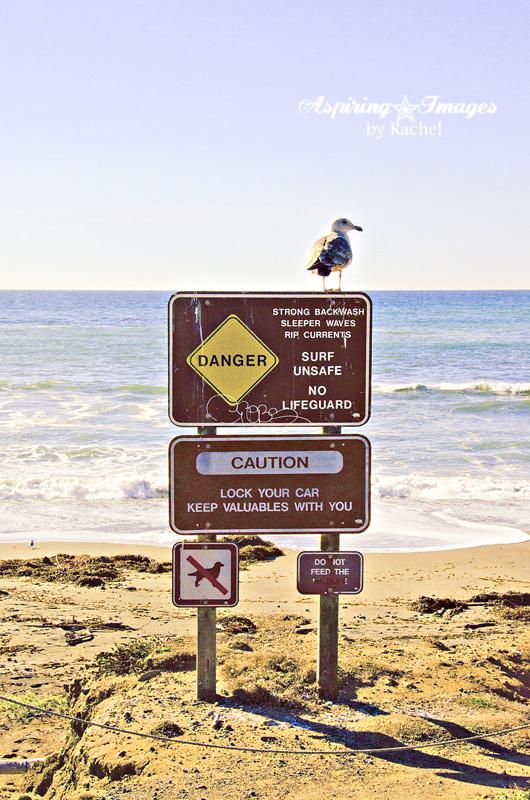 AspiringImagesbyRachel-California-Seagull-BeachSign