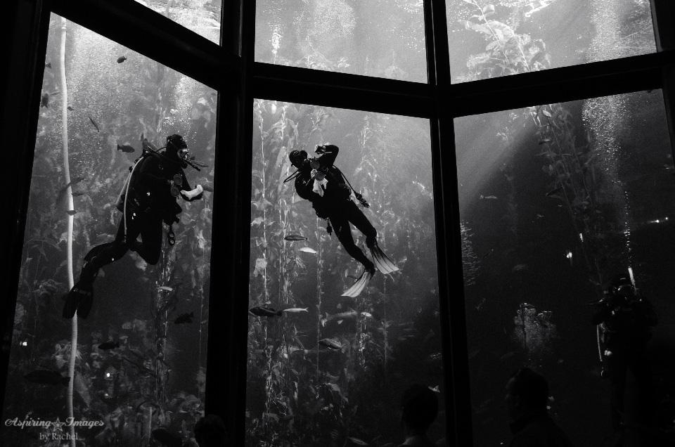 AspiringImagesbyRachel-California-MontereyAquarium-Divers-BW
