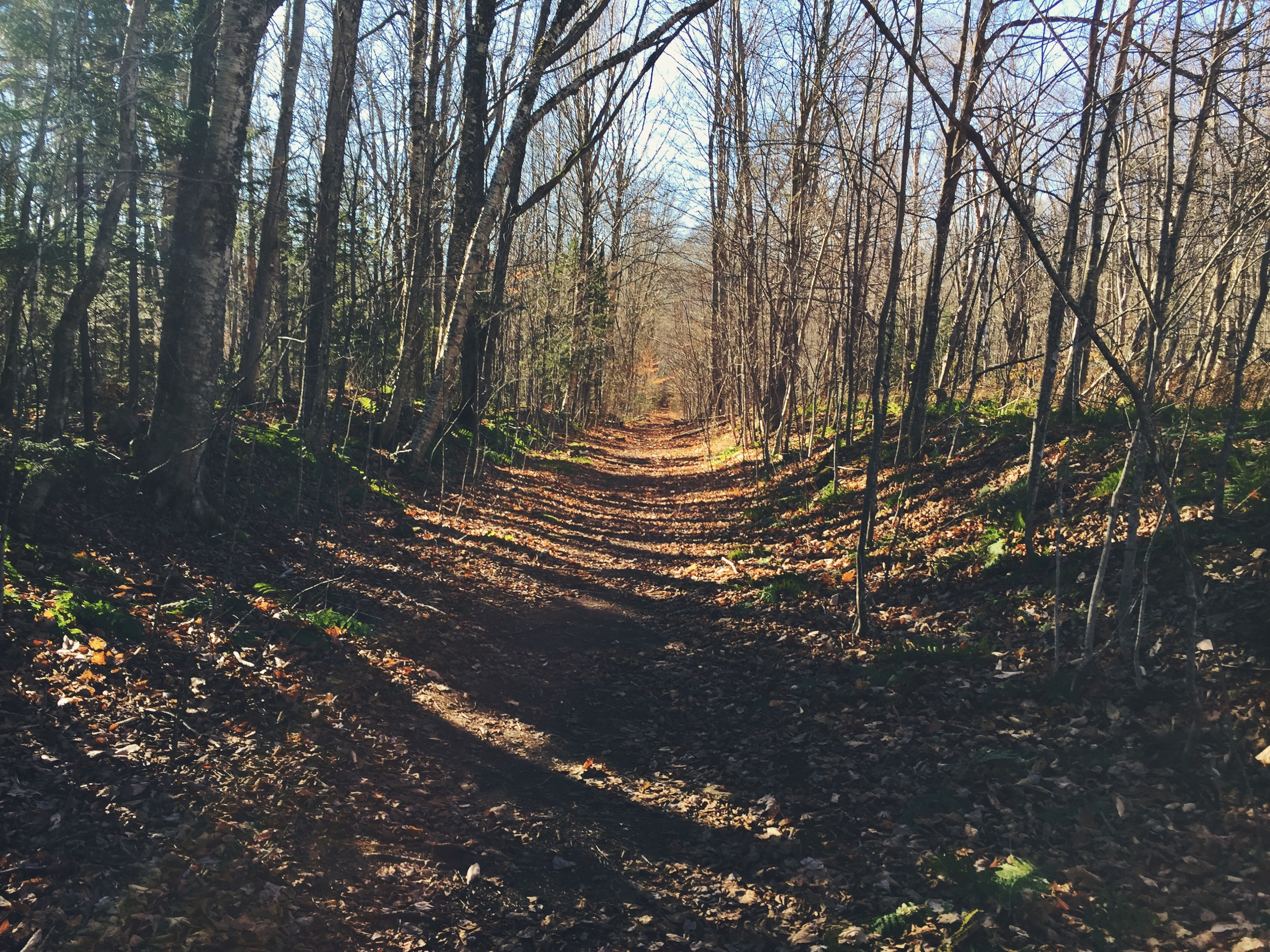 Walking the old logging railroad is a wonderful care-free way to finish this beautiful hike.