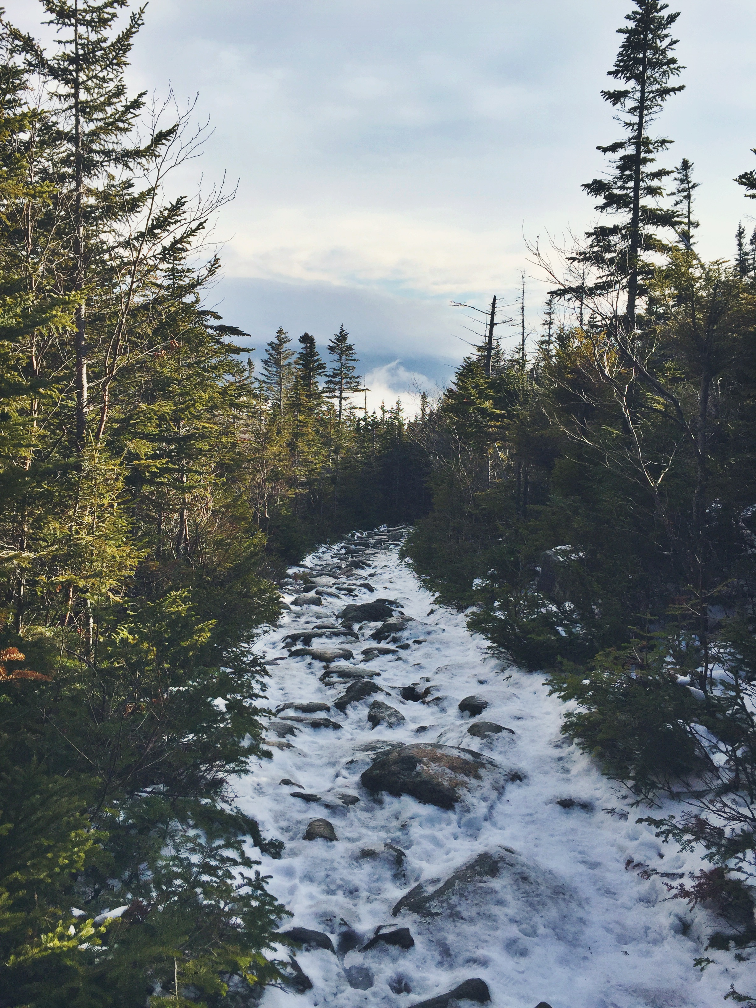 The last few miles back to Pinkham Notch are steady and quite easy, allowing Teton the option to jog down the mountainside.