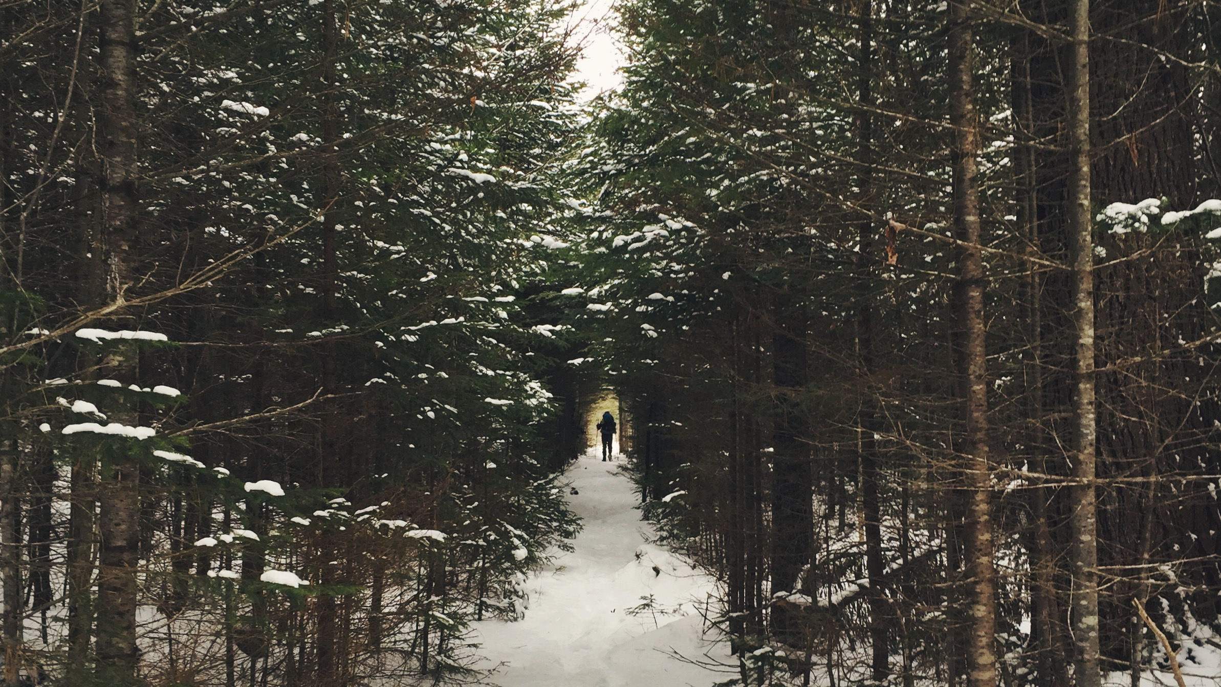Tunnel of trees as we break from the Lincoln Woods Trail