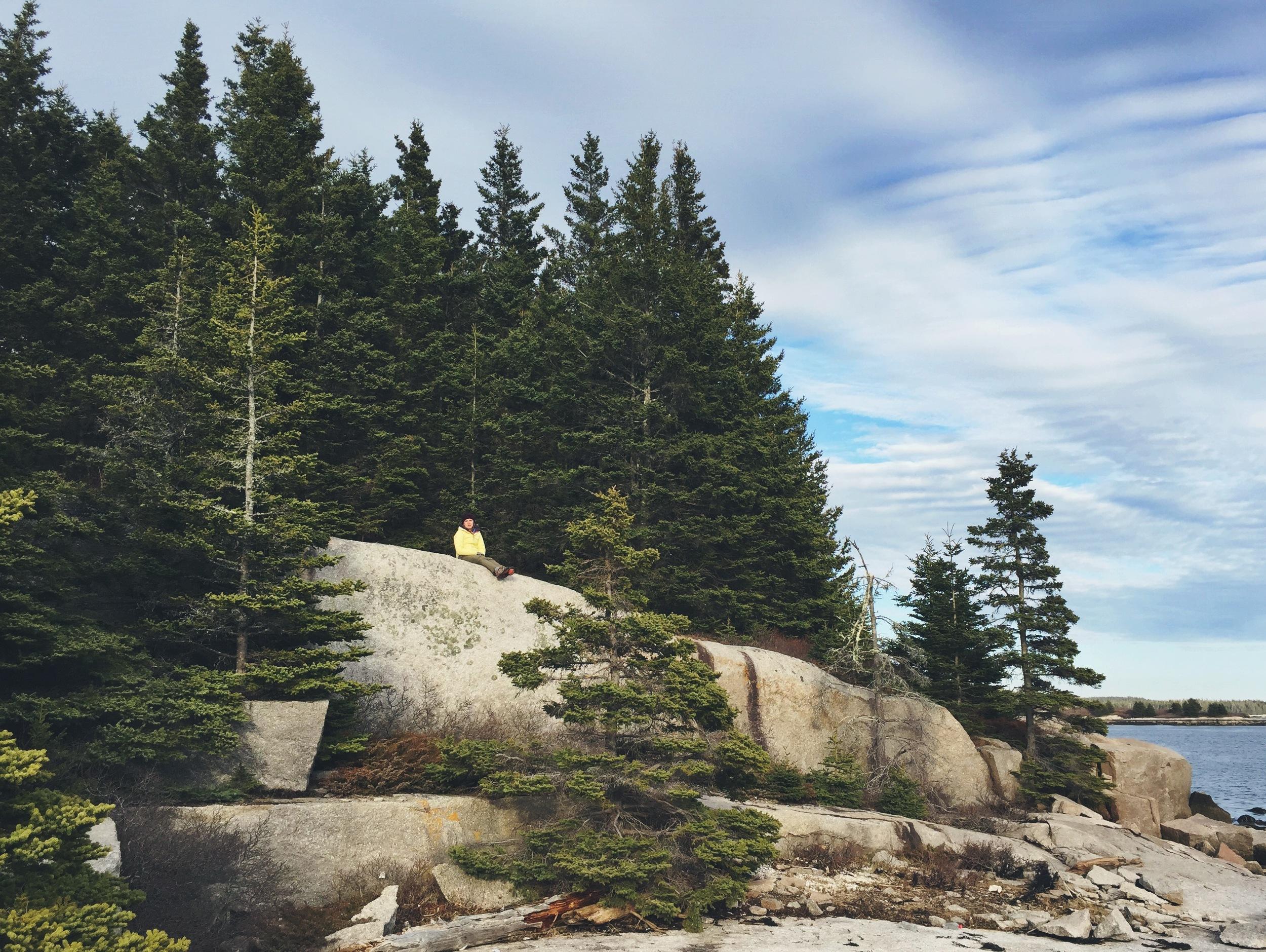 Moose on the rocks