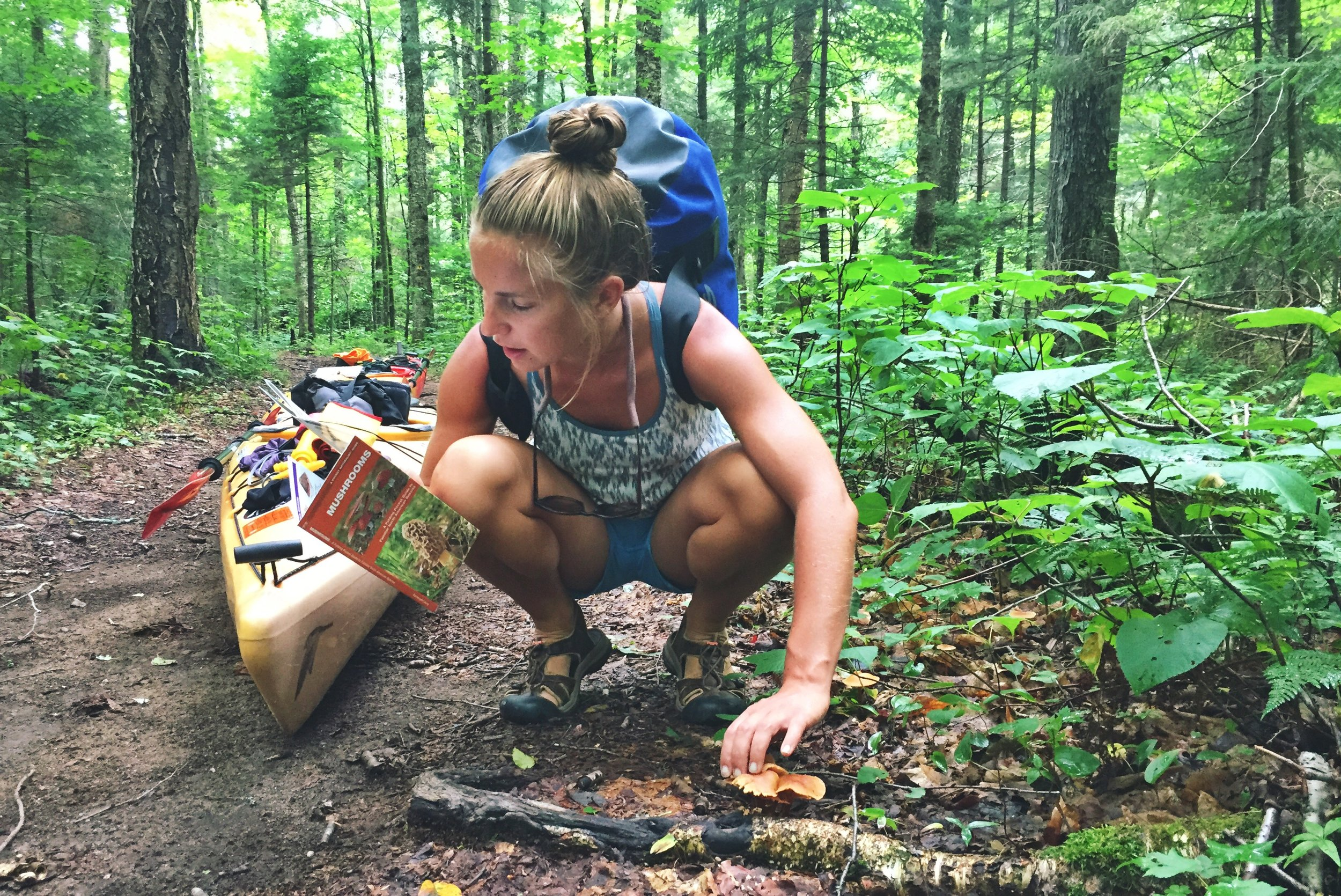 There have been many different kinds of mushrooms in these Adirondack forest.