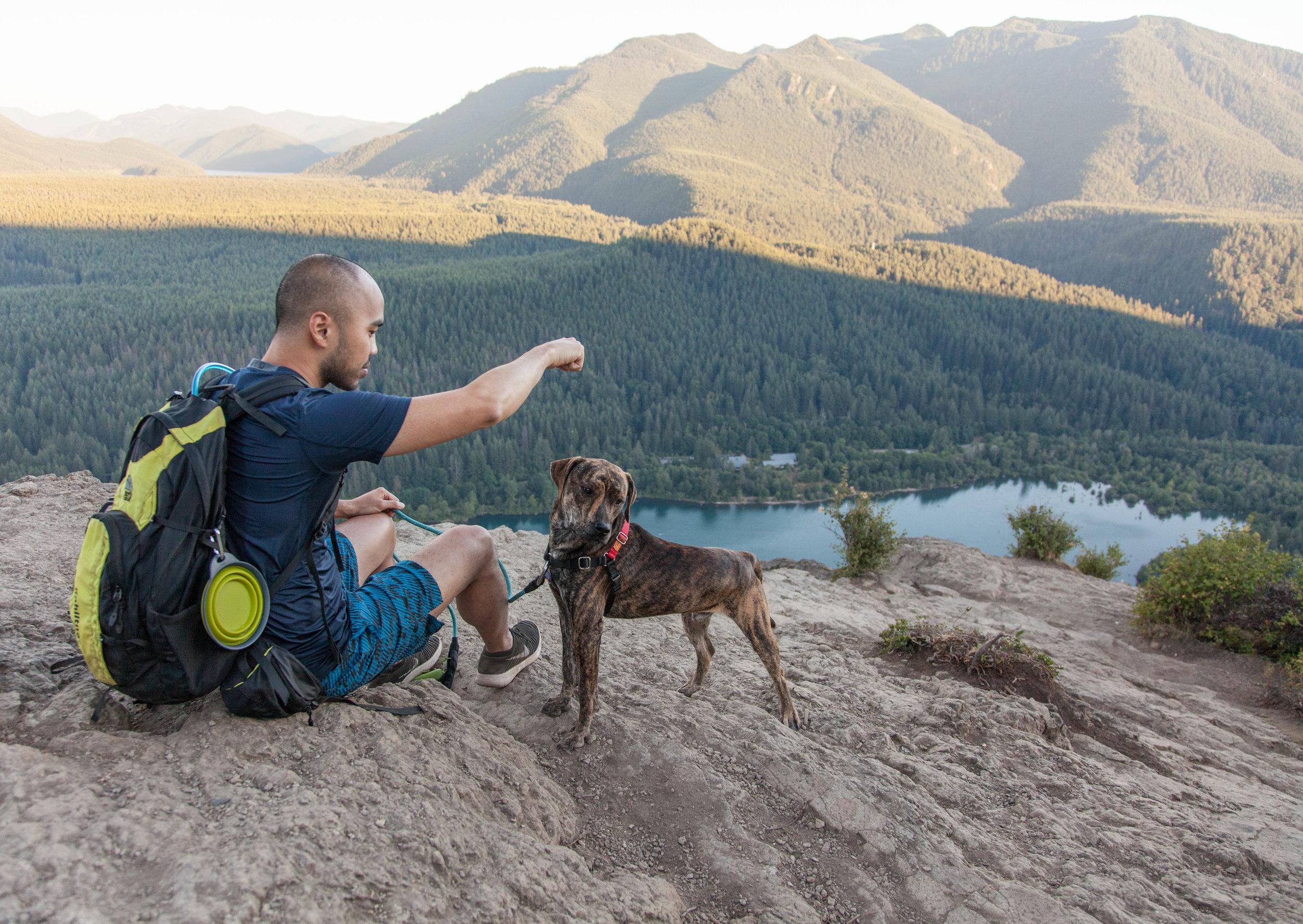 Kuma on his first hike to Rattlesnake Ledge