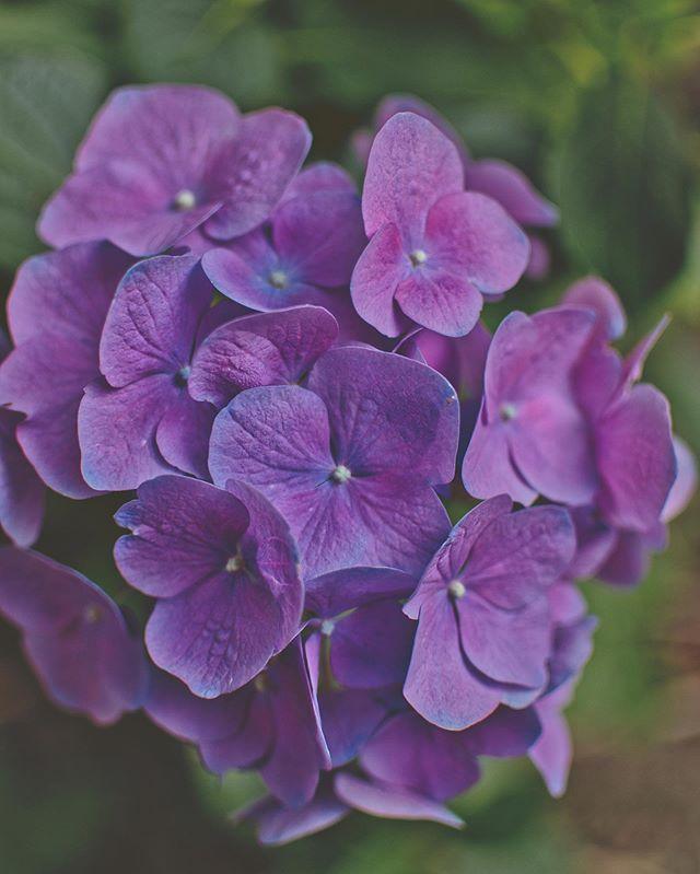 Summer flowers #photography #summer