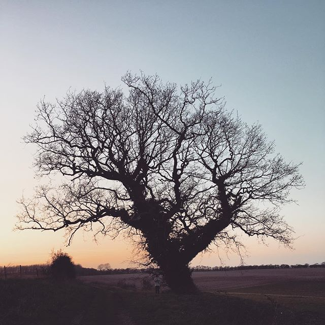 Thank you Norfolk for a lovely week. Admittedly I could've done without the norovirus part 😷 But you were - you are - still heavenly ✨ . . . . . . . . #norfolk #southcreake #norfolkwalks #ouroaktree #dusk #englishlandscape