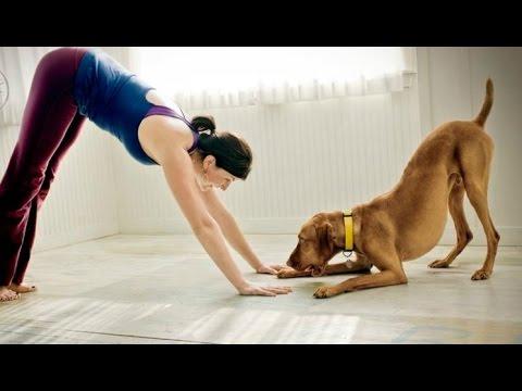 Dog yoga.jpg
