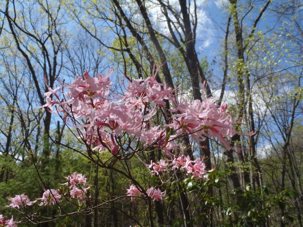 nature-Appalachian-trail