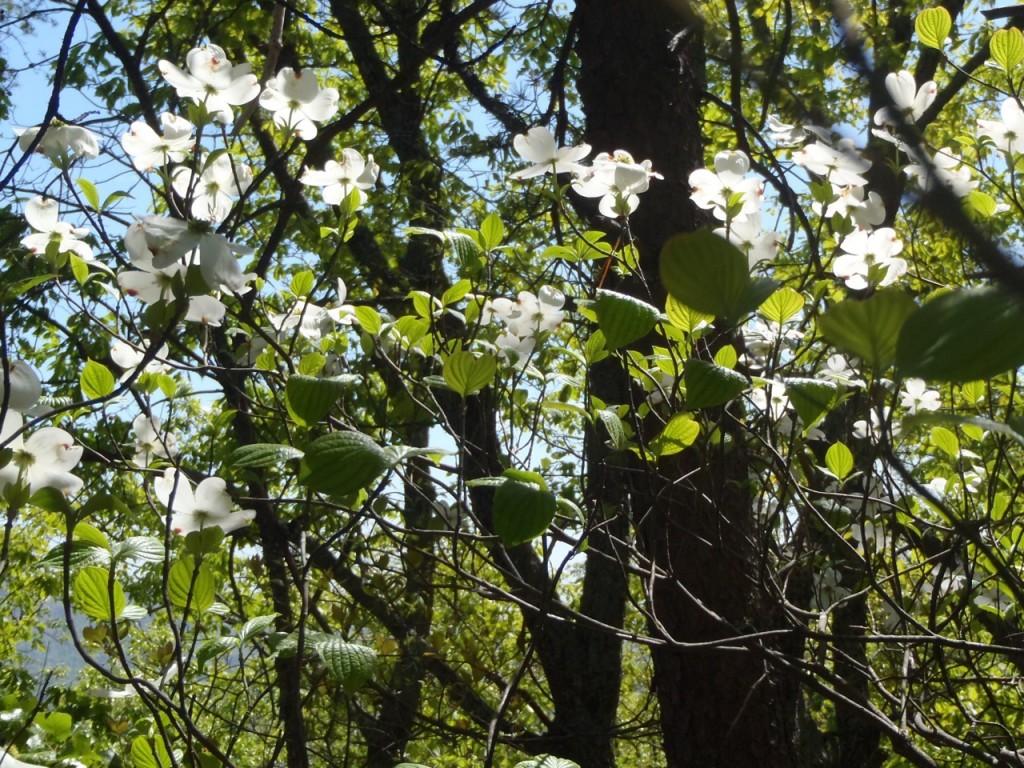 nature-Appalachian-Trail-hiking