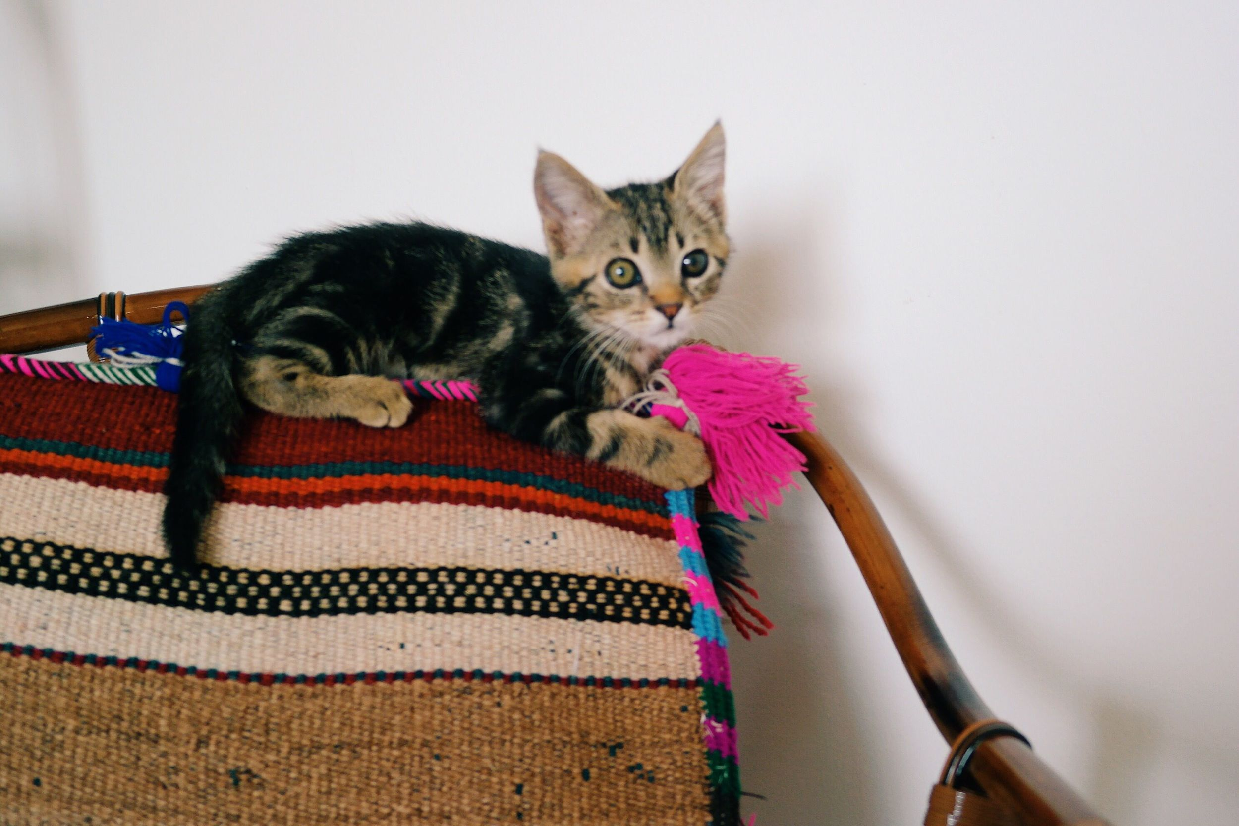 Here is a photo of Mozi the kitty; it's hard to believe he used to be so tiny!