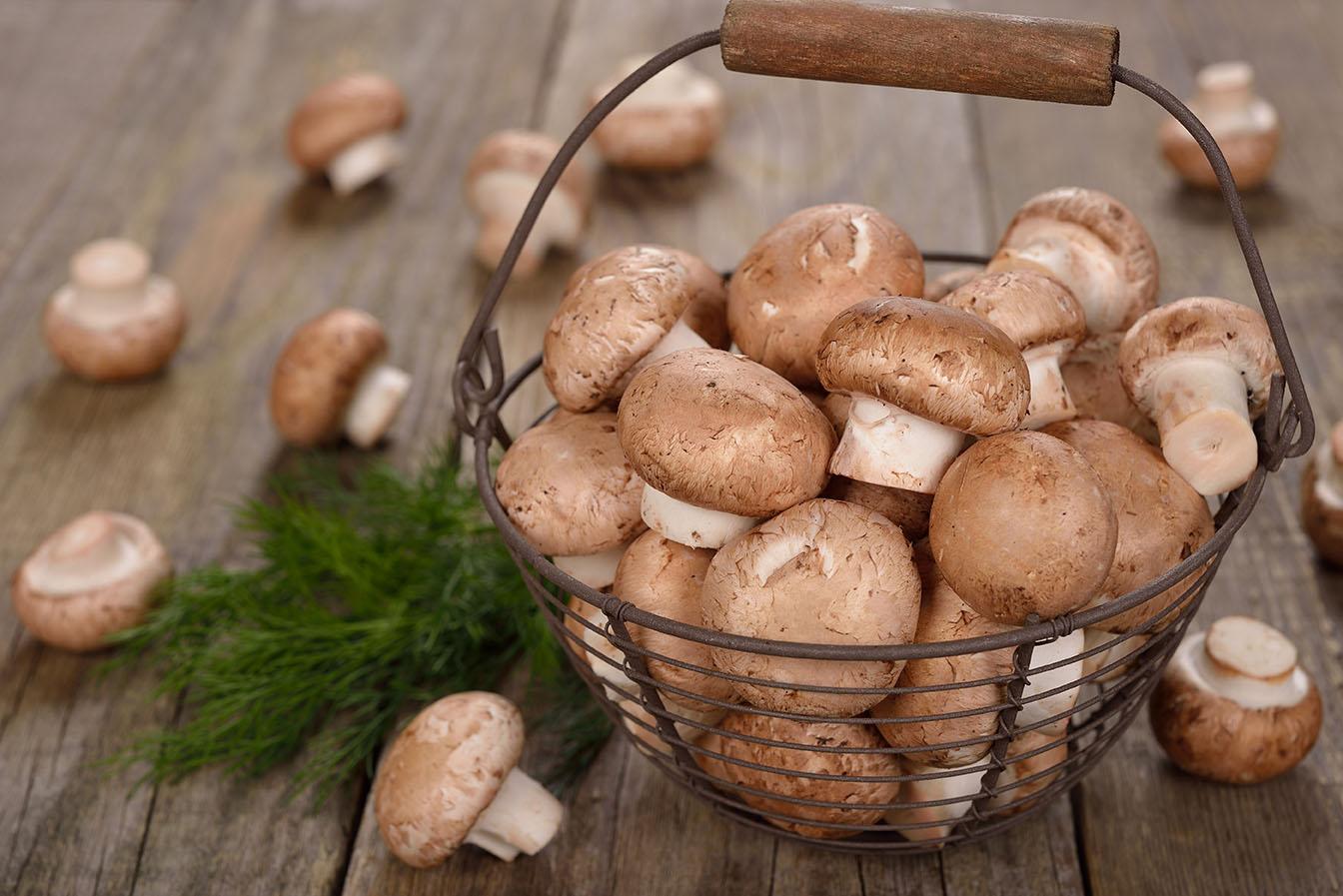 Mushroom equipment