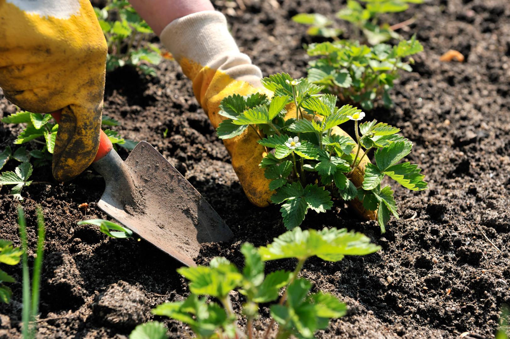 Horticultural equipment