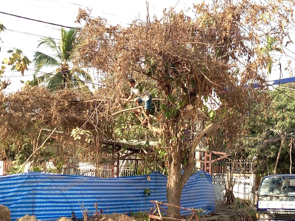 This man is cutting down the dead vines draped around the electricity cables with a bamboo pole and a machete
