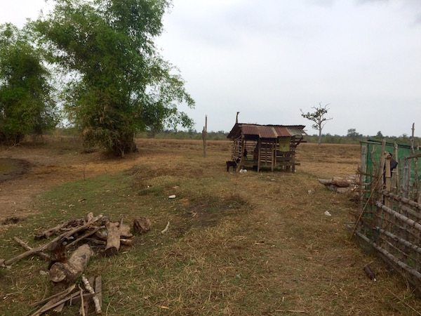 This is a typical goat shelter, constructed from tree branches and bamboo, with a tin or thatched roof