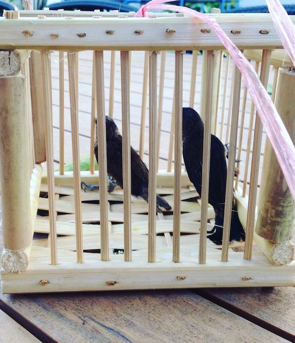 eatdrinklaos-vientiane-pi-mai-temples-birds1