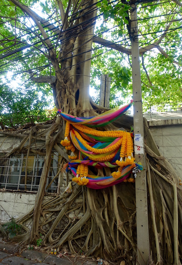 Down a Bangkok alleyway, we found this colourfully festooned tree, half supporting, half intertwined with a building. Maybe it's decorated for Pi Mai (new year) or maybe just because it's an awesome tree.