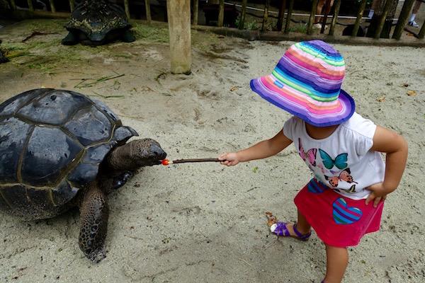 eatdrinklaos-singapore-best-family-fun-zoo-galapagos