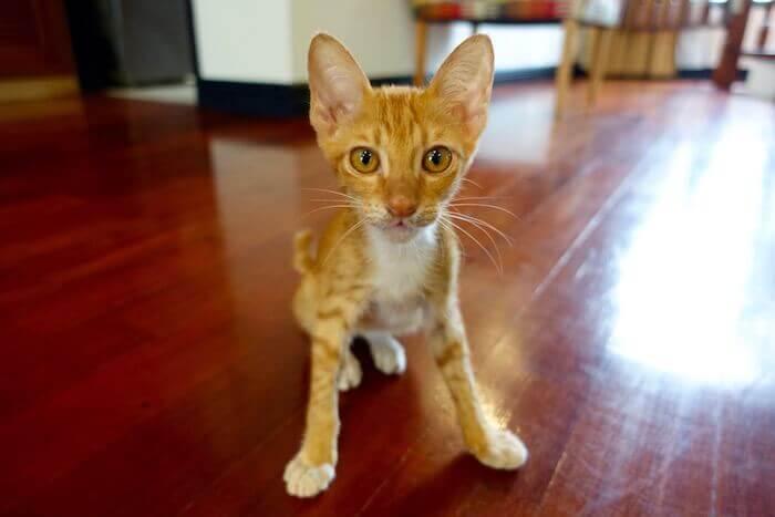 eatdrinklaos-vientiane-cat-menagerie-socks